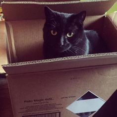 Fun with boxes.... #joey #cat #kitten #babypanther by chloelauren_8 http://www.australiaunwrapped.com/