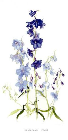Lyn Noble | American Society of Botanical Artists