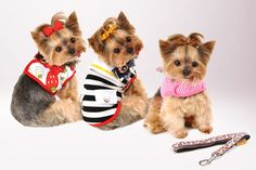 Summer Swag for Your Pooch
