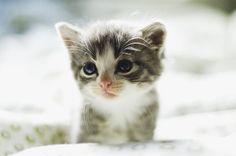 Cute Animals Aww