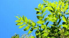 Leaves. Sky. Leaves, Sky, Plants, Heaven, Heavens, Plant, Planets