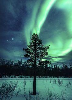 Tree of Alternate Life, Kildalen, Storslett, Norway. (by torivarn)
