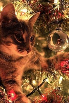 Mirror Image - These Adorable Puppies and Kittens are Fully In the Christmas Spirit - Photos