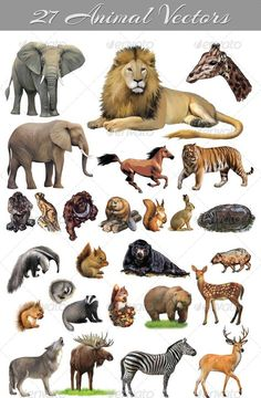 Buy 27 Animal Vectors by raheelahmad on GraphicRiver. 27 Animal Vectors in Adobe Illustrator (AI) version in this attached zip A EPS File Animal Vector (EPS). Animal Paintings, Animal Drawings, Zoo Drawing, Illustrator Cs5, Printable Animals, Creature Concept Art, Digital Painting Tutorials, Animal Cards, African Animals