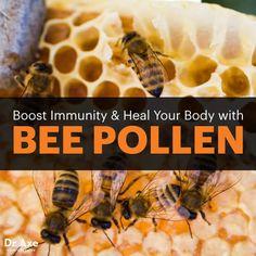 Bee pollen - Dr. Axe http://www.draxe.com #health #Holistic #natural