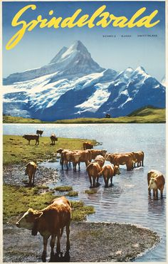 Grindelwald - Bachalpsee Schreckhorn / Niederhauser 1959 / Berner Oberland