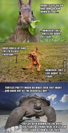 turtles...