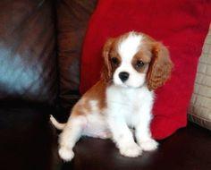 #adorable #puppy !!!