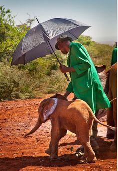 Rescued baby elephant in Kenya, Africa.