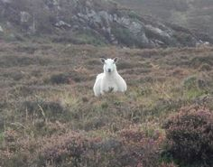 When you drive down rural roads in the Highlands you get a lot of notice from the locals...