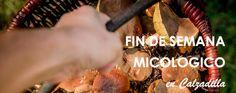 Fin de semana de setas. Micología y más | yuniqtrip