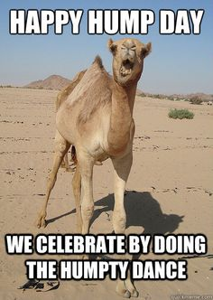 hump day pictures with camels | happy hump day we celebrate by doing the humpty dance - God Camel