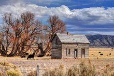 Wyoming Cowboy Homestead