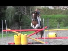 Showtym Viking - Bareback and Bridleless. This pony does grand prix show jumping in New Zealand. SO CUTE