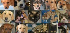 HEART of the Midlands, Help Every Animal Reach Tomorrow, Columbia, SC