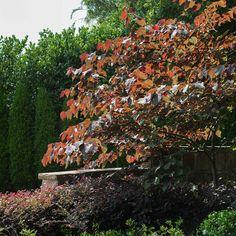 Light Highlights, Secret Gardens, Morning Light, Pansies, Trees, Christmas Tree, Leaves, Colour, Shape