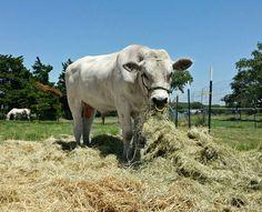 (149) Ganadería y Agricultura - Fotos