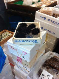sea urchins at tsukiji fish market tokyo  www.sojournerwalker.com