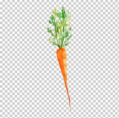 This PNG image was uploaded on January am by user: Fchat and is about Architectural Drawing, Beetroot, Branch, Carrot Vector, Draw. Easter Paintings, Watercolor Paintings, Peter Rabbit, Carrot Drawing, Vegetable Drawing, Garden Clipart, Vegan Tattoo, Stencil Patterns, Party Kit