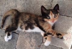 I don't really care for cats...but this little kitty here is  absolutely gorgeous!