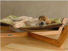 Bamboo Cat/Dog Hammock  http://www.tenniswood.co.uk