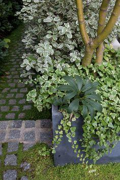 Mais de 1000 ideias sobre terrasse en pav no pinterest for Jardin xavier de chirac