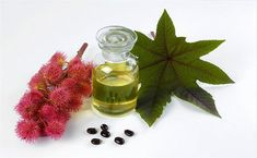 come usare l'olio di ricino per la salute e la bellezza