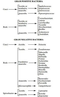 Microbiology Unknown Identification Chart Luxury 58 Recent Flow Microbiology Gram Stain Flow Chart Science Biology, Medical Science, Medical Coding, Teaching Biology, Life Science, Computer Science, Forensic Science, Medical School, Medical Care