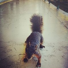 our crazy squirrel friend at the LA apartment