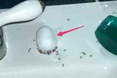 Rid of Ants Overnight
