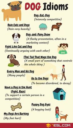 Dog Idioms & Dog Sayings! Useful list of common dog idioms & phrases in English with meaning, ESL printable worksheet and example sentences. Learn the idiom dog and pony show meaning and other dog sayings in English. Learn English Grammar, English Writing Skills, English Fun, English Vocabulary Words, English Phrases, Learn English Words, English Language Learning, English Study, English Lessons