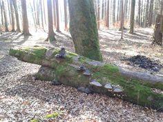 Am Wochenende haben wir eine tolle Wanderung durch den Wald bei Aying gemacht. Das Wetter war toll. Mein 5-jähriger Sohn machte super mit.