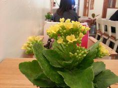 카페의 봄