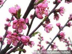 que faire au jardin en janvier planter et protger jardinage pinterest planters - Quoi Faire Au Jardin
