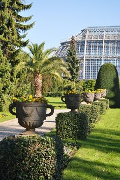 the botanical gardens of berlin - yes, there's a palm tree in berlin, and it looks like it has been kept alive for many years!