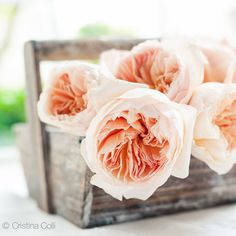 Peach English David Austin roses - Giclée print    available in my Etsy shop - Photography & Styling by Cristina Colli