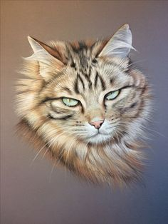 Portrait de chat type maine coon au pastel, sur commande d'aprés photo