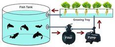DIY Aquaponics System | Check out my personal Aquaponics project at www.davaoaquaponics.com