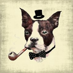 dogs-and-pipes-dogooder-zupi9