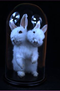 "Fake(Mislabeled) - This was created not a real animal. - The item ""taxidermy of two headed rabbit mounted in glass dome"" made with two real rabbits by lovefuture on Etsy is no longer available.(lovefuture also made a jackalope)"