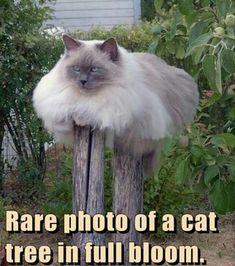 Cat tree.