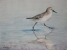 """Sand Piper Shore Bird"" Watercolor by Charlotte Yealey"