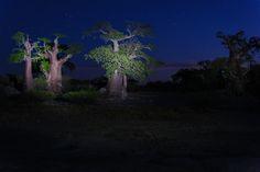 Kubu Island, Botswana, Africa, Makgadikgadi Tom Ford, Northern Lights, Africa, Island, Nature, Plants, Travel, Painting, Scenery