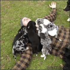How much do YOU love dogs? (12 photos)