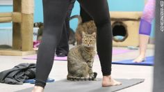 Cat yoga: The mewest exercise trend - CNN.com