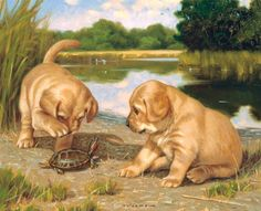 Lang July 2014 Wallpapers: Puppy Puppy Pictures, Dog Photos, Animal Pictures, Puppies And Kitties, Cute Puppies, Cute Dogs, Animals And Pets, Cute Animals, Canvas Art Projects