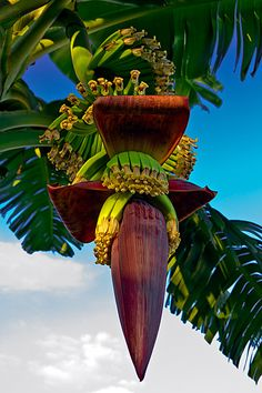 banana flower. Almost too good to be true.