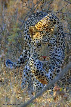 DSC_9087 by © Arno Meintjes Wildlife