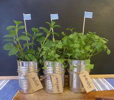 beachcomber: mini herb garden
