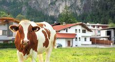 Apartment Tirol - #Apartments - $54 - #Hotels #Austria #Münster http://www.justigo.net/hotels/austria/munster/apartment-tirol_39054.html
